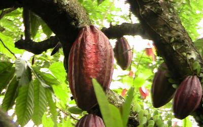 Zuccarello-finechocolate - viaggio alla ricerca del cioccolato (1)