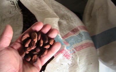 Zuccarello-finechocolate - viaggio alla ricerca del cioccolato (12)
