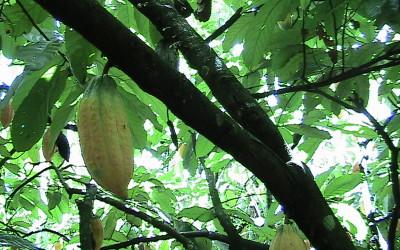 Zuccarello-finechocolate - viaggio alla ricerca del cioccolato (18)