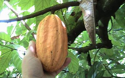 Zuccarello-finechocolate - viaggio alla ricerca del cioccolato (19)
