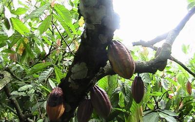 Zuccarello-finechocolate - viaggio alla ricerca del cioccolato (2)