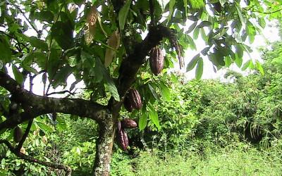 Zuccarello-finechocolate - viaggio alla ricerca del cioccolato (8)